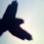 Make a photograph that features a shadow as your subject today. // Admittedly, I'm just doing it with my hand.