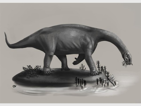 RAIN LIZARD: Discovered by Wits PhD students, this is artist's impression of what the newly described Pulanesaura dinosaur would have looked like. Photo: Provided.