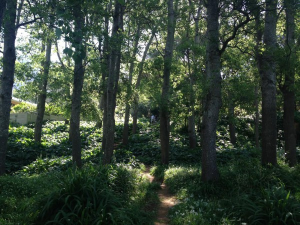 STAYING SAFE: Newlands Forest is a well-frequented place and also the location where a 28-year-old woman recently got raped for hours two weeks ago.