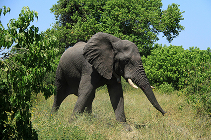 13_FitBit & Elephant_1