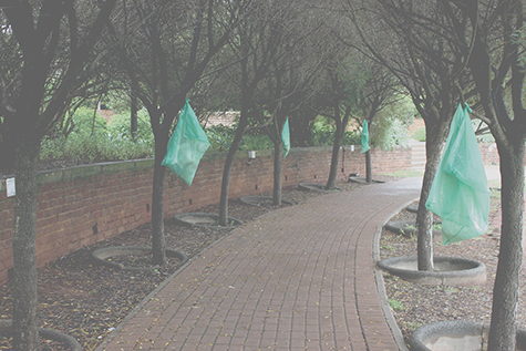Plastic dustbin bags have replaced concrete bins throughout Wits Braamfontein campus.