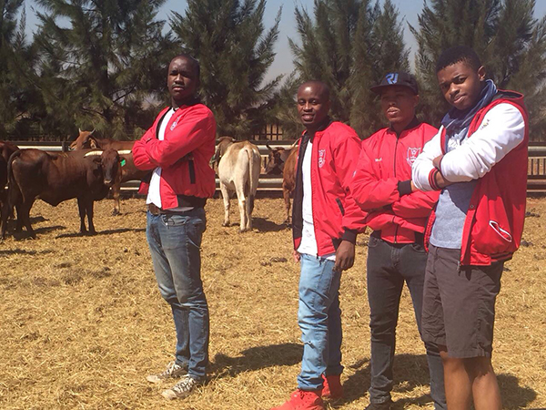 Men's Res expected to slaughter a cow for their 95th Birthday this weekend